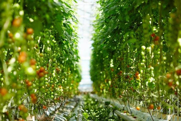 La agroindustria exportadora: mercados climáticos y mercados preferenciales